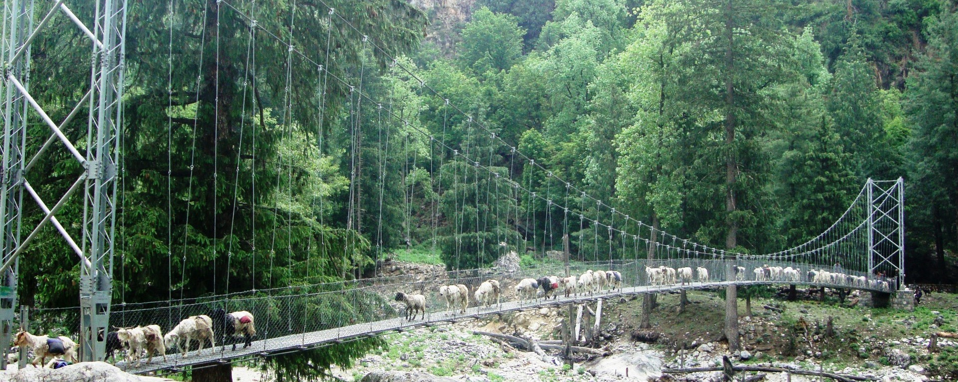 The sheep caravan crossing the suspension bridge.
